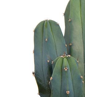 Das Männerpflanzen-Sortiment beinhalt all unsere Pflanzen für Männer.