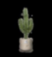 Pflanzen_kombiniert_bruce.png