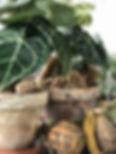 Anthuriumgefässe.jpg