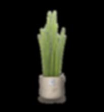 Pflanzen_kombiniert_william.png