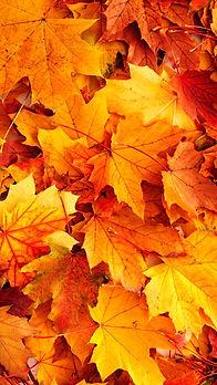 leaves_edited.jpg