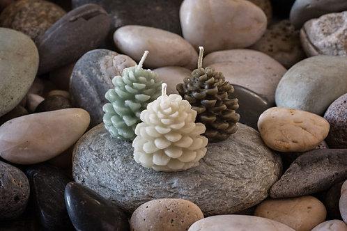 Pine Cone Trio in Botanical color set