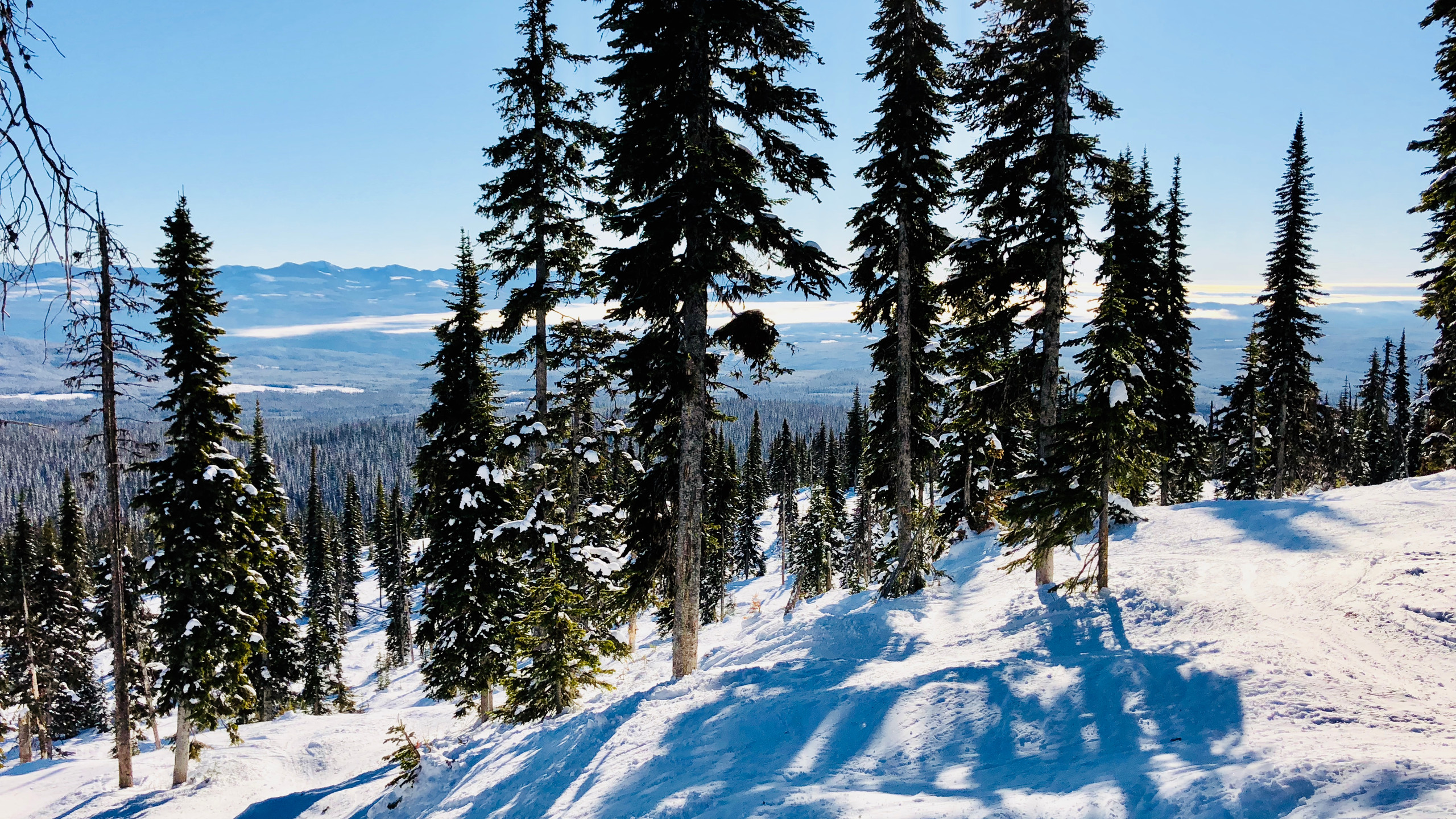 Tree Skiing in Black Forest side of Big White Mountain