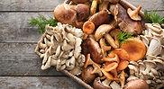 Different-Types-of-Mushrooms.jpg