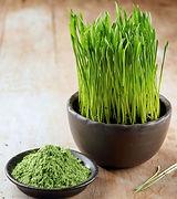 wheatgrass powder.jpg
