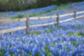 Ranch Interiors Brenham TX (7).jpg