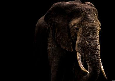 Elephant%20with%20Black%20background_edi