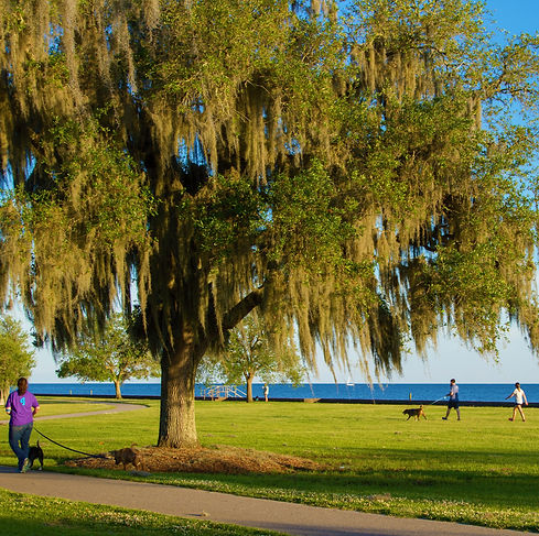Dog walking on the Mandeville Lakefront.