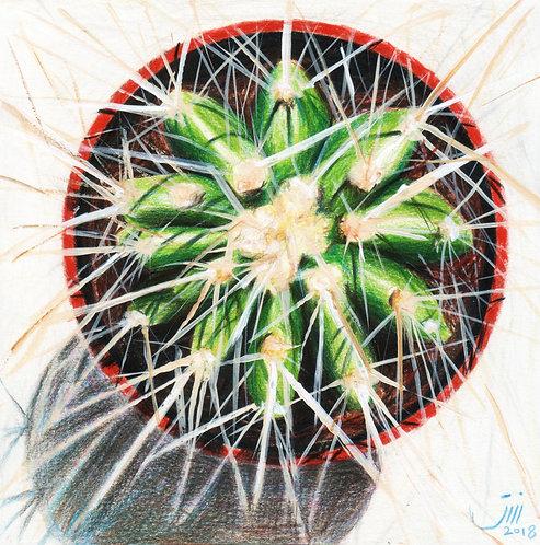 No.109, My Cactus