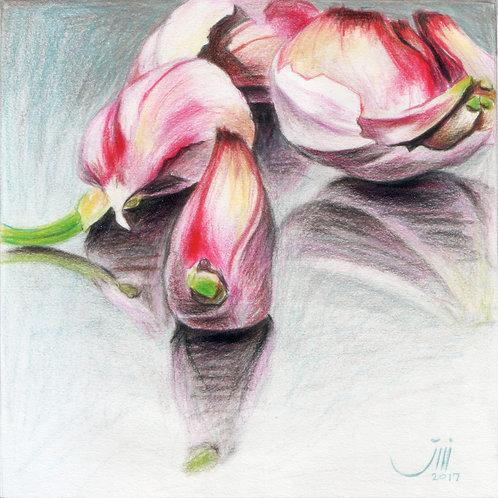No.88, Purple Garlics