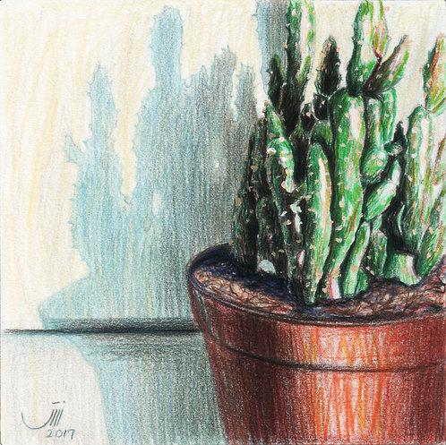 No.99, My Cactus