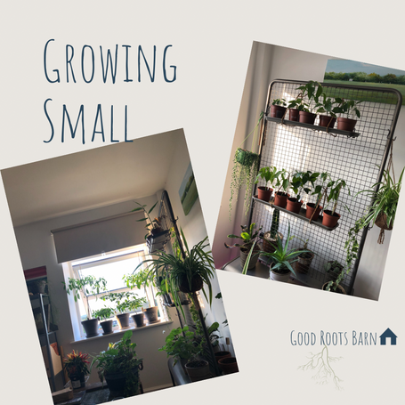 Growing Small