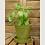 """Thumbnail: Haxnicks 8"""" Bamboo Saucer"""