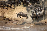 Wildebeest Migration Safari September 2021