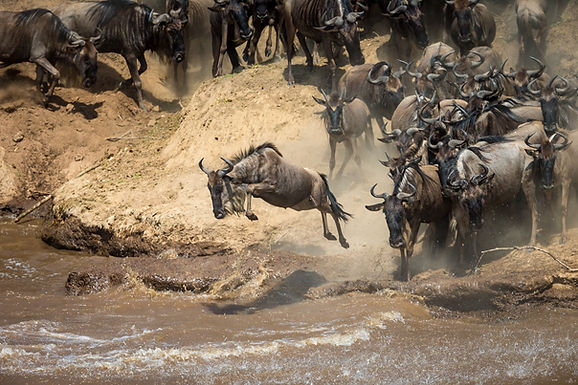 Wildebeest Migration Safari II August 2022