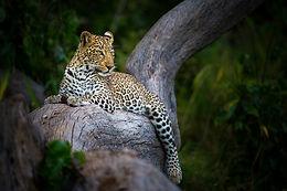 Botswana/South Africa Wildlife Safari April 2022