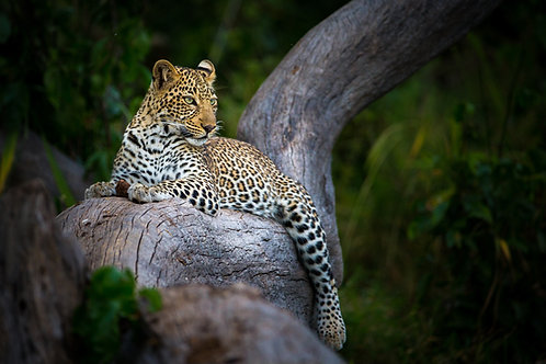 April 10- 20, 2022 Botswana/South Africa Safari