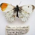 gynandromorph%20butterflies_edited.jpg