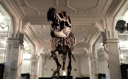 Tyrannosaurus%20Rex_edited.jpg