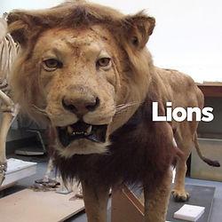 Objects - Lions.jpg