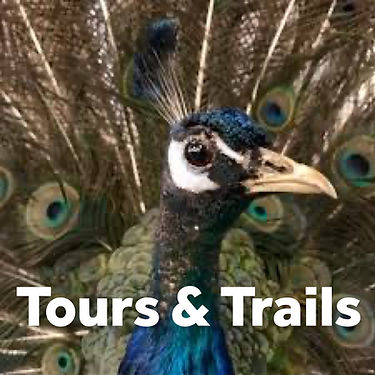 tours and trails.jpeg