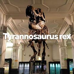 Object - Tyrannosaurus rex.jpg