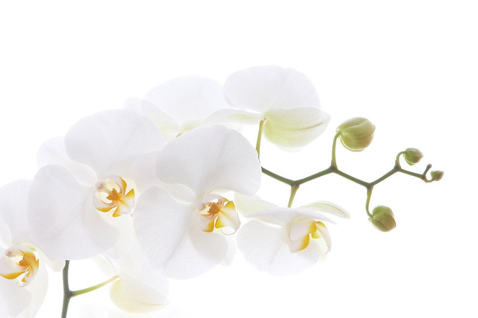 05 Orchidee_edited.jpg