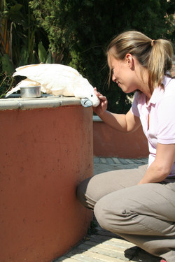 2010 to 2017 Bridges of unity volunteer and cockatoo