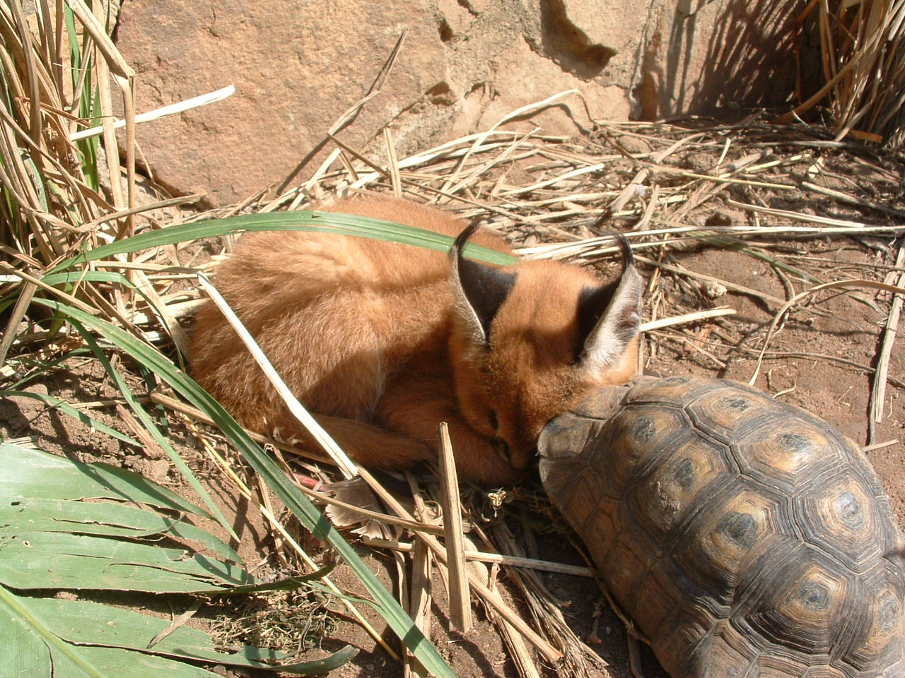 2003 Teckie and tortoise
