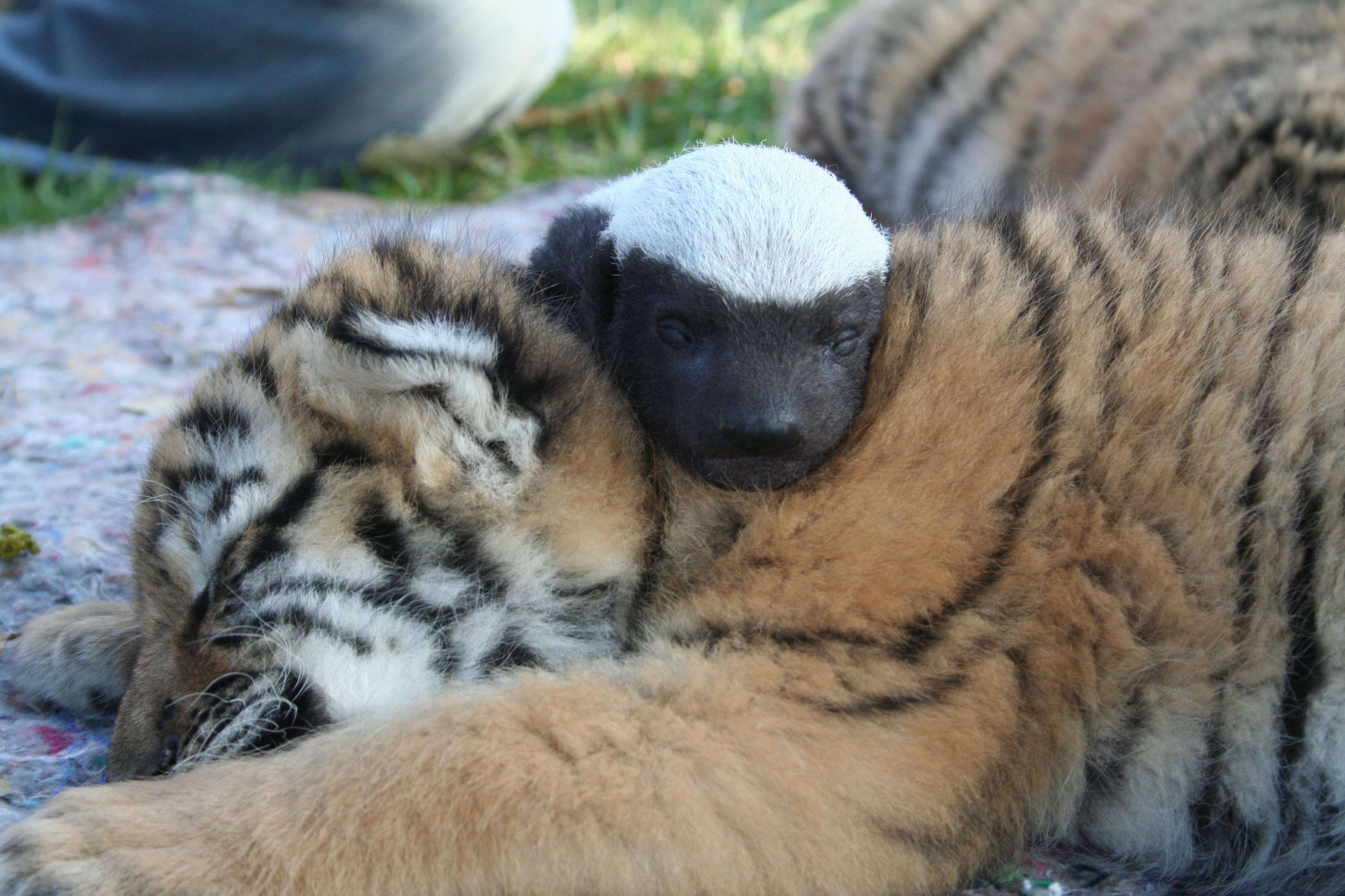 Lory Park Zoo