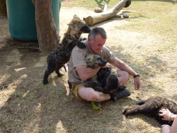 Eddy hyena