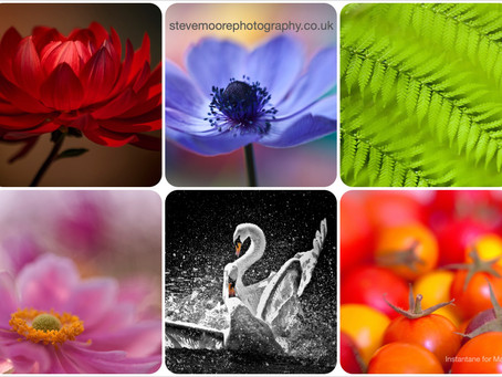 New to Flower Photography? No problem.....