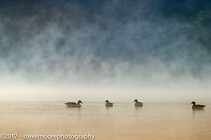 Mist over a lake / water with ducks