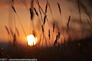 Flower photography sun set