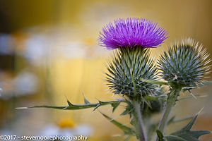 flower photography, flowers, flower, garden flower, garden flowers, purple punk,