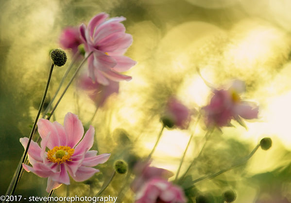 flower, flowers, photography