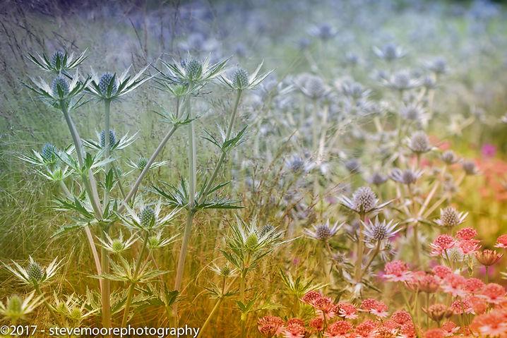 Flowers, flower, photography, flower photography, rainbow