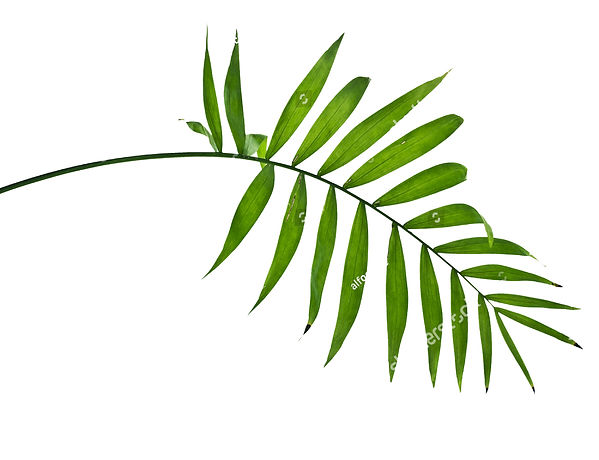 stock-photo-green-leaves-of-palm-tree-on