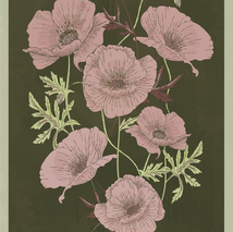 Poppies Illustration