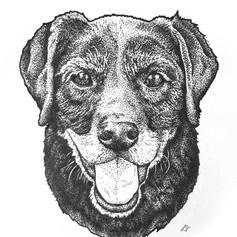 Oreo Pen Illustration