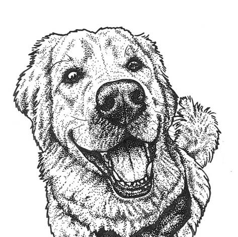 Scout Pen Illustration