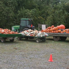 Pumpkins available in fall