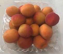 apricot2021_edited.jpg