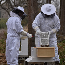Installing new bee packages into our hives