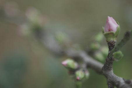 Spring Buds _edited.jpg