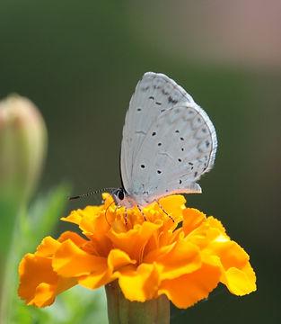 Butterfly%20on%20a%20Flower_edited.jpg