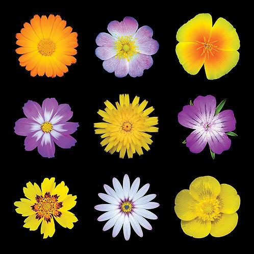 "20"" x 20"" wildflower photographic montage"