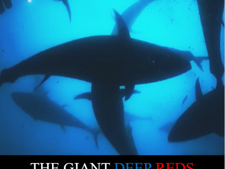 Maurice Micallef's The Giant Deep Reds Picks Interest