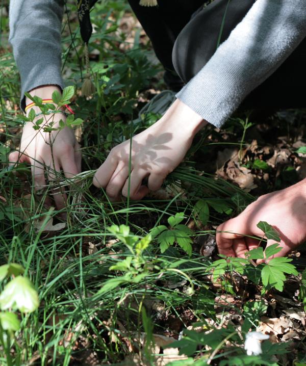 Connaître les plantes comestibles