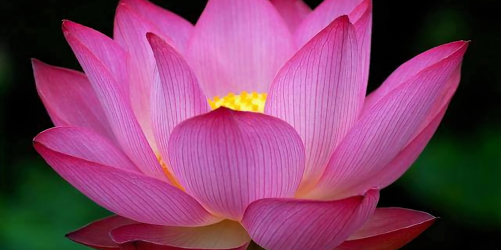 Yin yoga for kjærlighet og mot